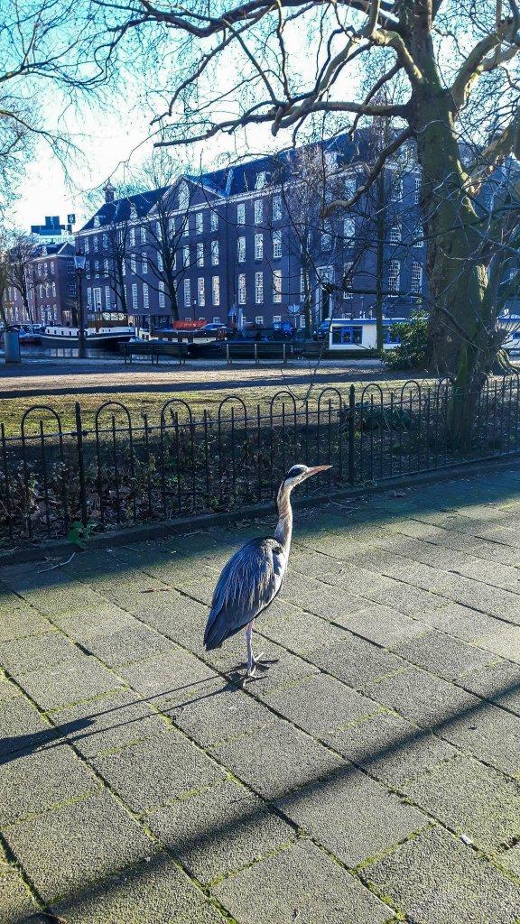 Heron bird in Amsterdam