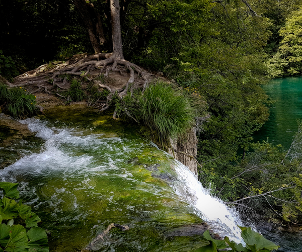 Beautiful waterfall and amazing long roots of flora in Plitvice Lakes area