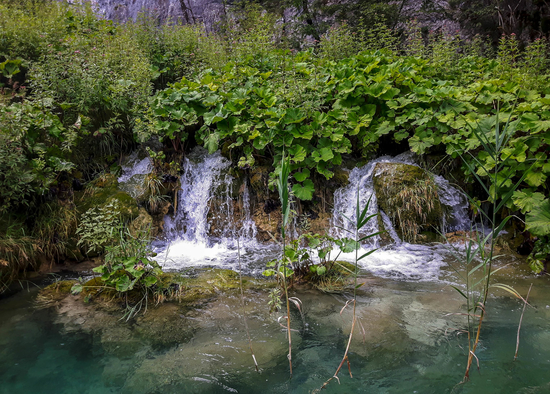 Small waterfalls and green flora in Plitvice Lakes