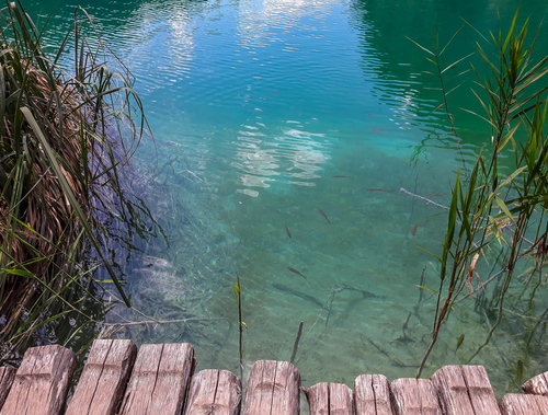 Flora and fauna in one photo of Plitvice Lakes