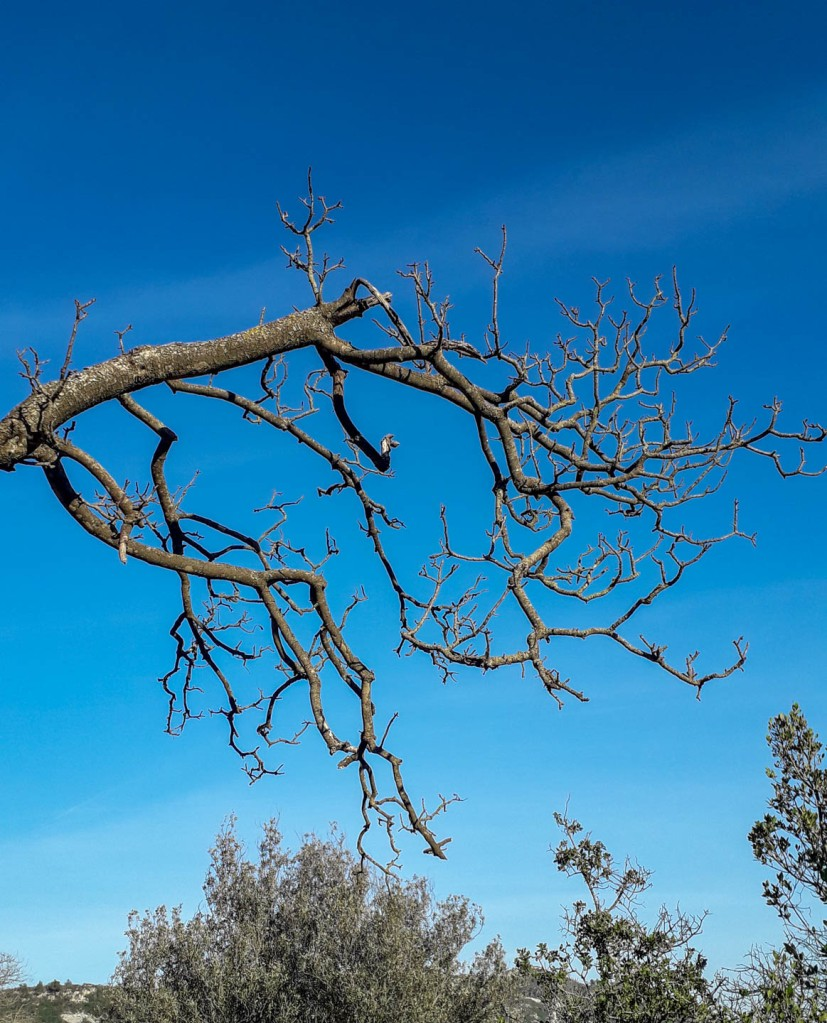 Nature photo, a beautiful leafless tree on the background of the blue sky