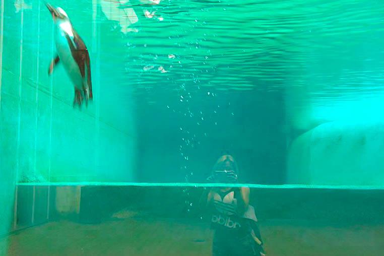 ARTIS Zoo Amsterdam aquarium
