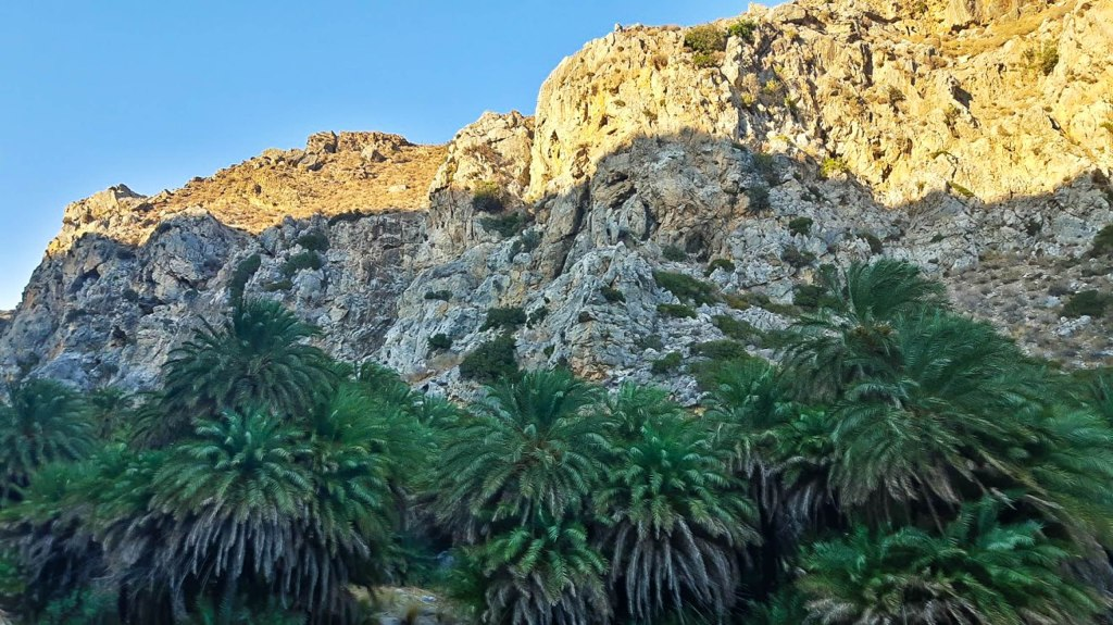 Palms in Preveli beach Crete