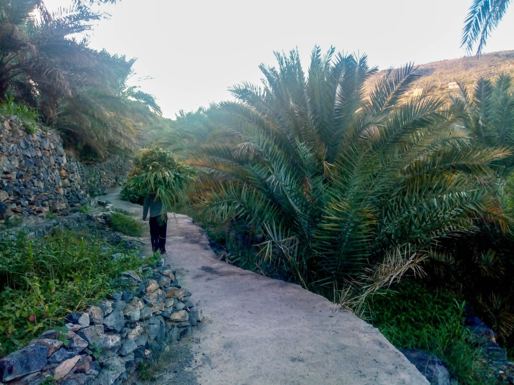 Palm trees in Oman country