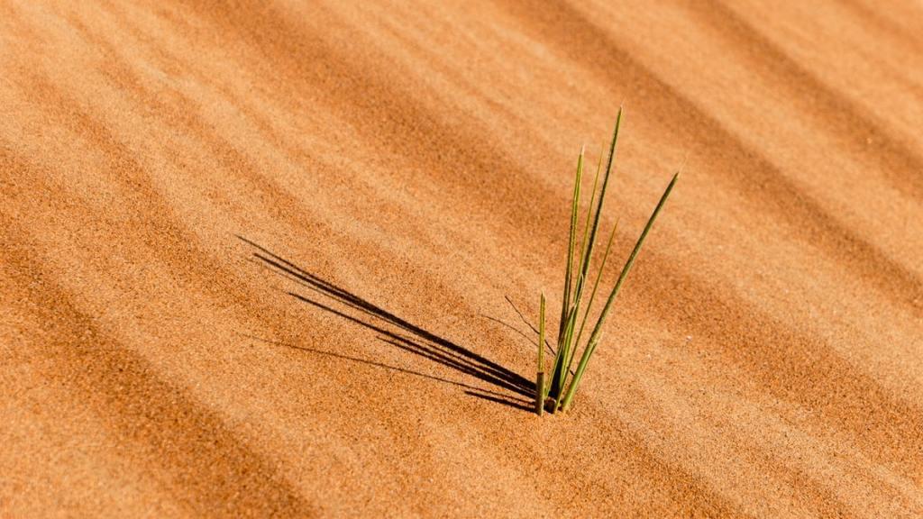 A piece of grass growing from the desert