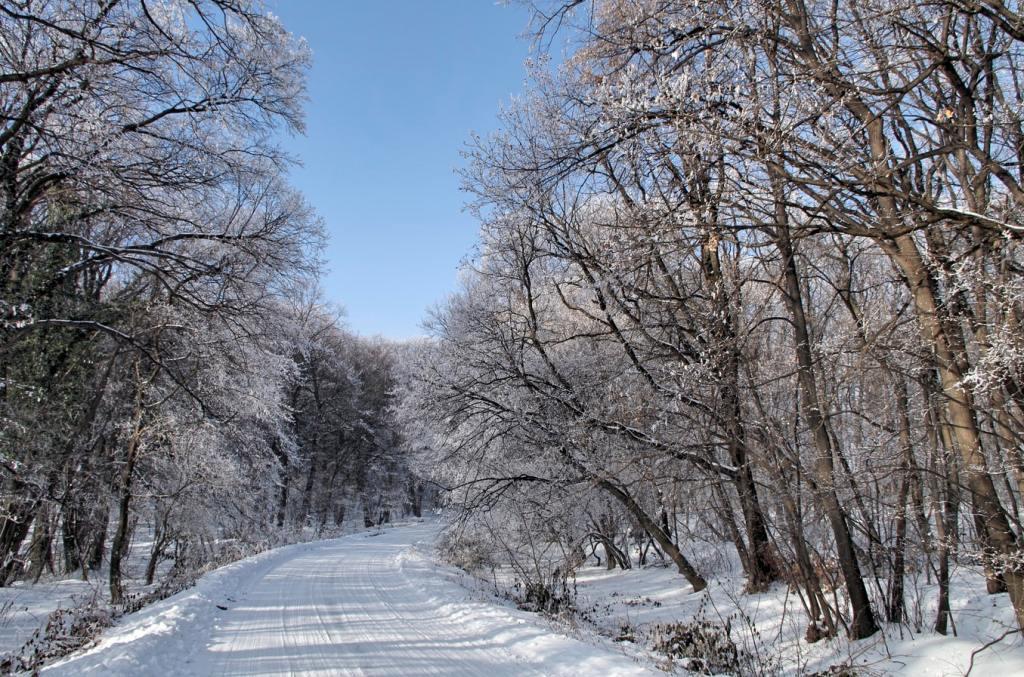 Fruška gora Vojvodina srbija tokom zime